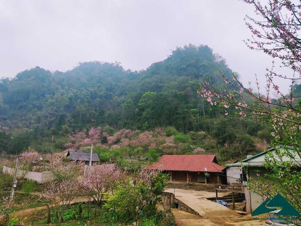 hoa dao long luong van ho (7)