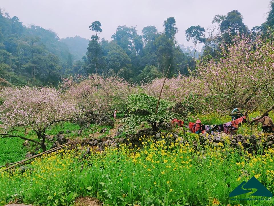 hoa dao long luong van ho (10)