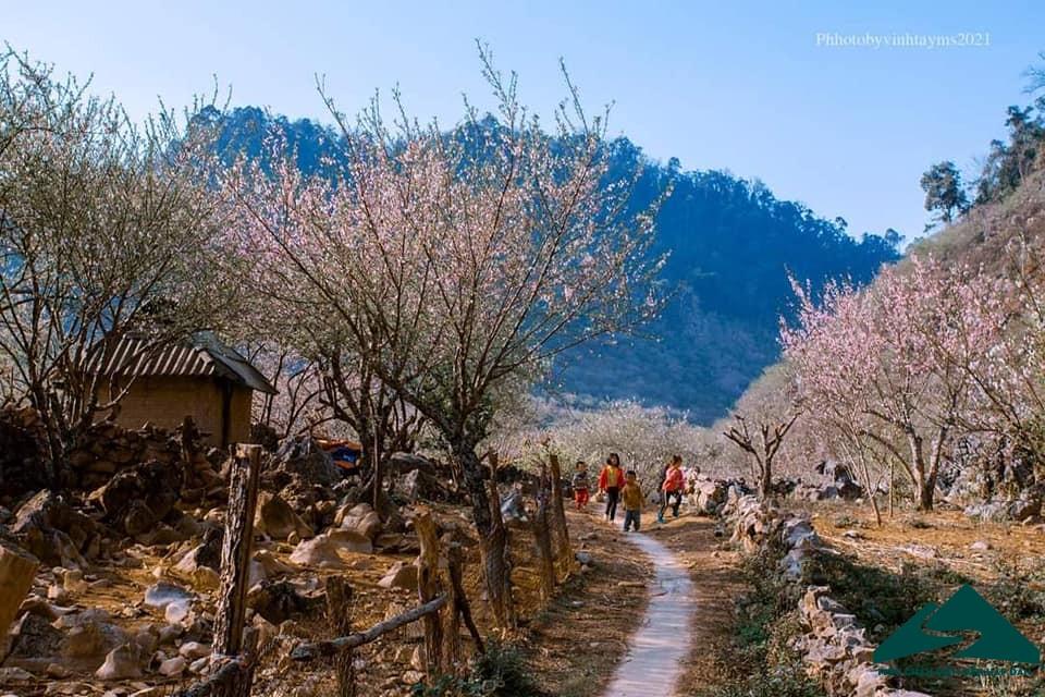 hoa dao long luong van ho (2)